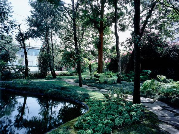 Jardin 7 Tomas